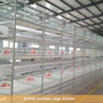 Chicken cages can not be ignored for cleaning work